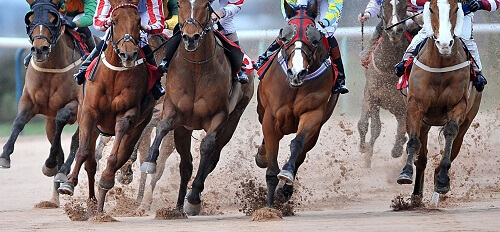 Horse Racing Betting - New Zealand