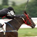 New Zealand Racing Industry Reform Coming in Early 2020