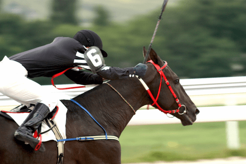 racing industry reform new zealand